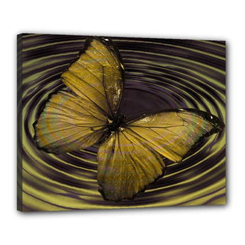 Butterfly Insect Wave Concentric Canvas 20  X 16