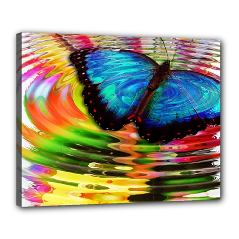 Blue Morphofalter Butterfly Insect Canvas 20  X 16