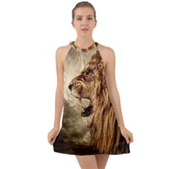 Roaring Lion Halter Tie Back Chiffon Dress