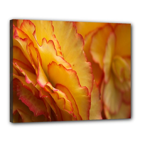Flowers Leaves Leaf Floral Summer Canvas 20  X 16