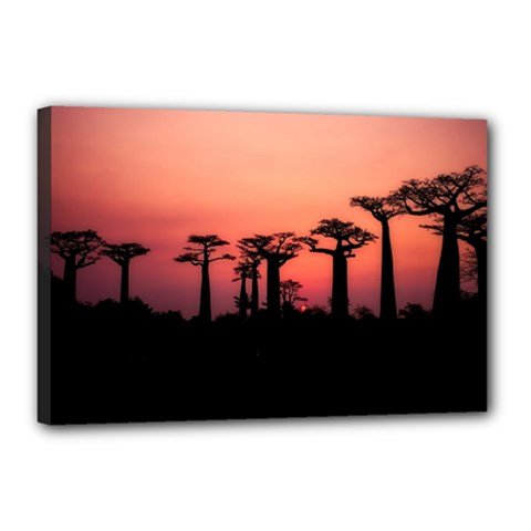 Baobabs Trees Silhouette Landscape Canvas 18  X 12