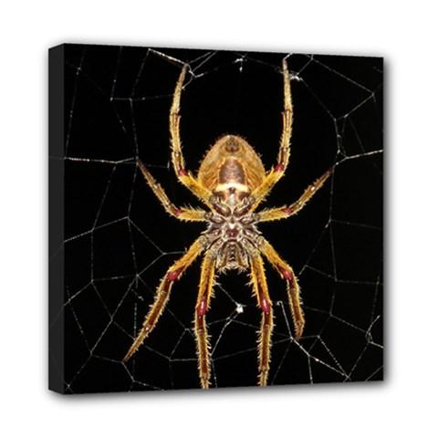 Insect Macro Spider Colombia Mini Canvas 8  X 8