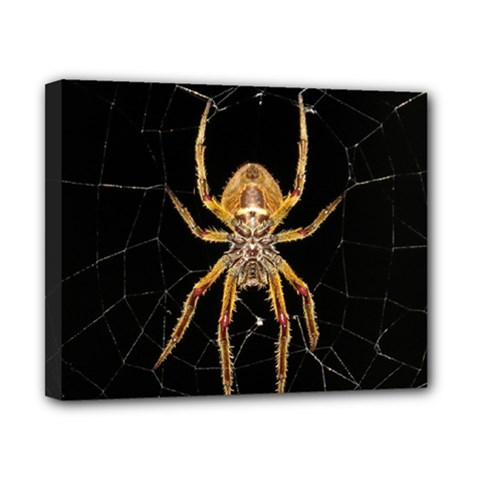 Insect Macro Spider Colombia Canvas 10  X 8