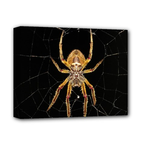 Insect Macro Spider Colombia Deluxe Canvas 14  X 11