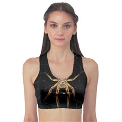 Insect Macro Spider Colombia Sports Bra