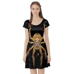 Insect Macro Spider Colombia Short Sleeve Skater Dress