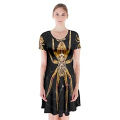 Insect Macro Spider Colombia Short Sleeve V Neck Flare Dress