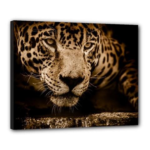 Jaguar Water Stalking Eyes Canvas 20  X 16