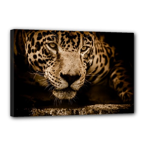 Jaguar Water Stalking Eyes Canvas 18  X 12