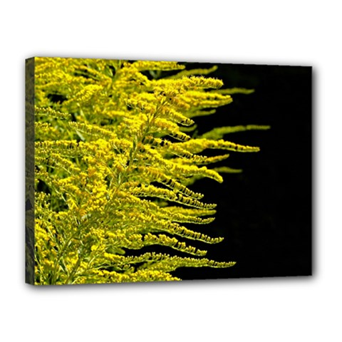 Golden Rod Gold Diamond Canvas 16  X 12