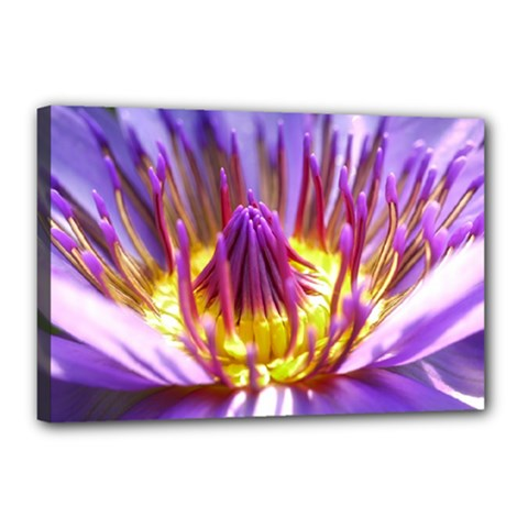 Flower Blossom Bloom Nature Canvas 18  X 12