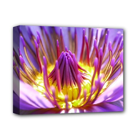 Flower Blossom Bloom Nature Deluxe Canvas 14  X 11