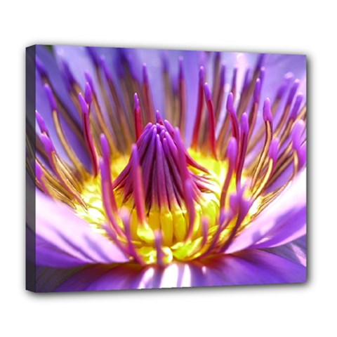 Flower Blossom Bloom Nature Deluxe Canvas 24  X 20