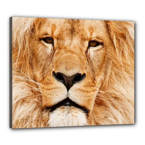 Africa African Animal Cat Close Up Canvas 24  X 20
