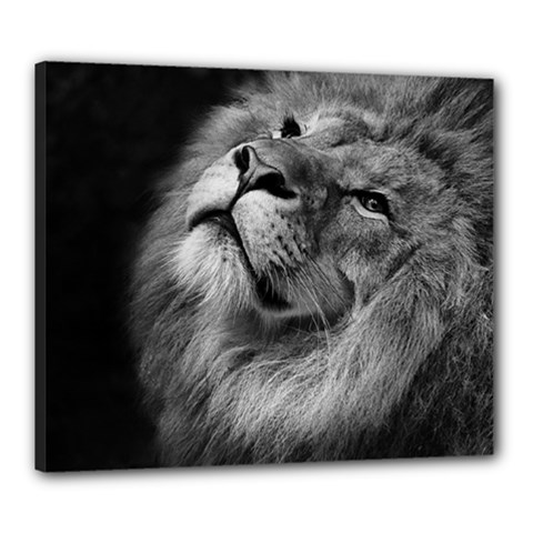 Feline Lion Tawny African Zoo Canvas 24  X 20