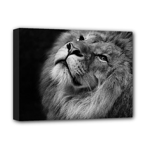 Feline Lion Tawny African Zoo Deluxe Canvas 16  X 12
