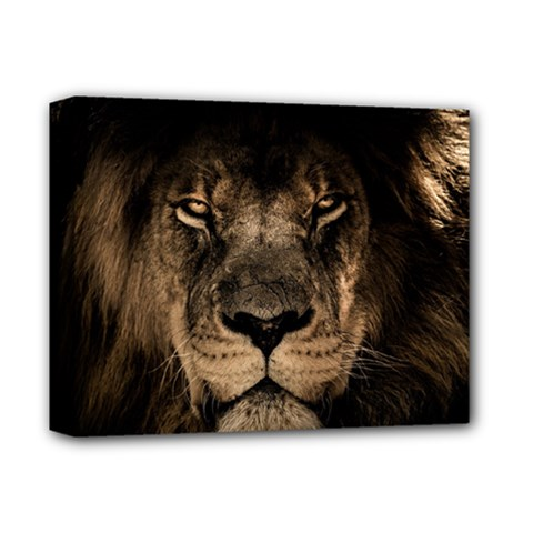 African Lion Mane Close Eyes Deluxe Canvas 14  X 11
