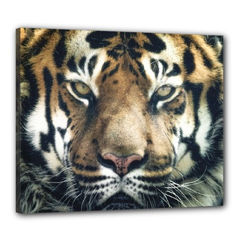 Tiger Bengal Stripes Eyes Close Canvas 24  X 20