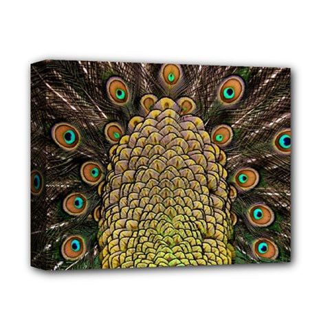 Peacock Feathers Wheel Plumage Deluxe Canvas 14  X 11