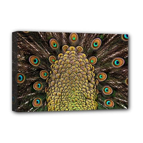 Peacock Feathers Wheel Plumage Deluxe Canvas 18  X 12