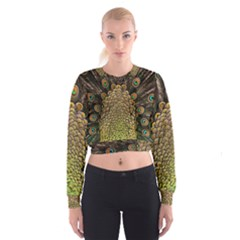 Peacock Feathers Wheel Plumage Cropped Sweatshirt