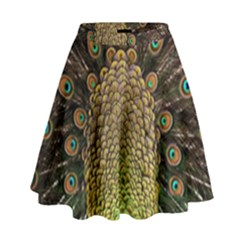 Peacock Feathers Wheel Plumage High Waist Skirt