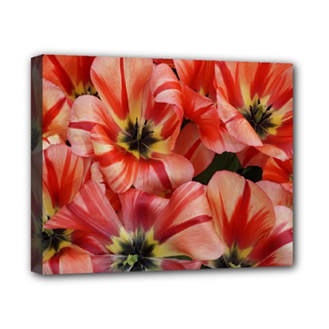 Tulips Flowers Spring Canvas 10  X 8