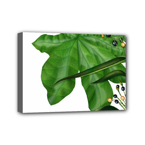 Plant Berry Leaves Green Flower Mini Canvas 7  X 5