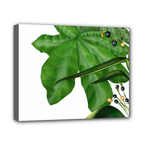 Plant Berry Leaves Green Flower Canvas 10  X 8