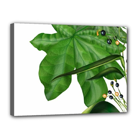 Plant Berry Leaves Green Flower Canvas 16  X 12