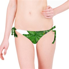 Plant Berry Leaves Green Flower Bikini Bottom