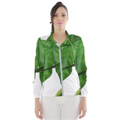 Plant Berry Leaves Green Flower Wind Breaker (women)