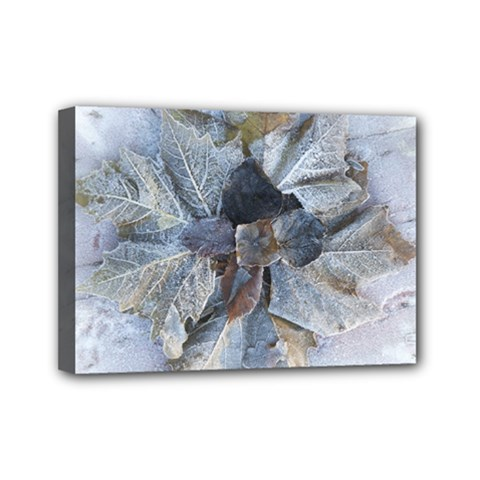Winter Frost Ice Sheet Leaves Mini Canvas 7  X 5