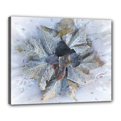 Winter Frost Ice Sheet Leaves Canvas 20  X 16