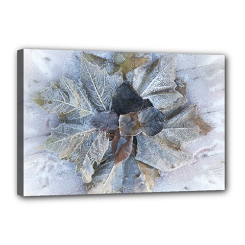 Winter Frost Ice Sheet Leaves Canvas 18  X 12
