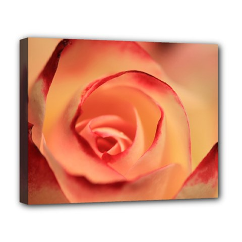 Rose Orange Rose Blossom Bloom Deluxe Canvas 20  X 16