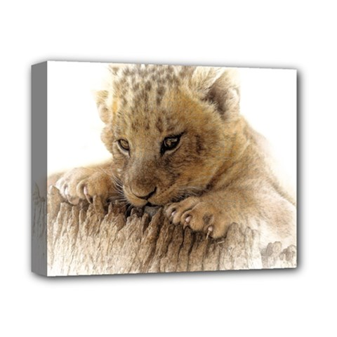 Lion Cub Close Cute Eyes Lookout Deluxe Canvas 14  X 11