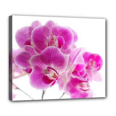 Orchid Phaleonopsis Art Plant Deluxe Canvas 24  X 20