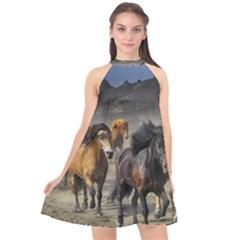 Horses Stampede Nature Running Halter Neckline Chiffon Dress