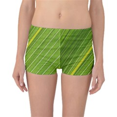 Leaf Plant Nature Pattern Boyleg Bikini Bottoms