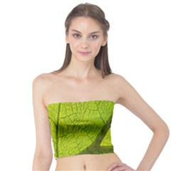 Green Leaf Plant Nature Structure Tube Top