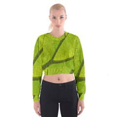 Green Leaf Plant Nature Structure Cropped Sweatshirt