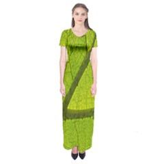 Green Leaf Plant Nature Structure Short Sleeve Maxi Dress