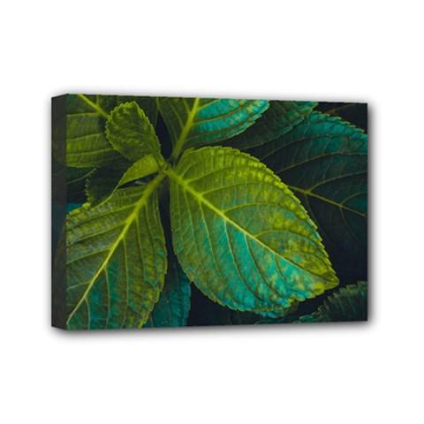 Green Plant Leaf Foliage Nature Mini Canvas 7  X 5
