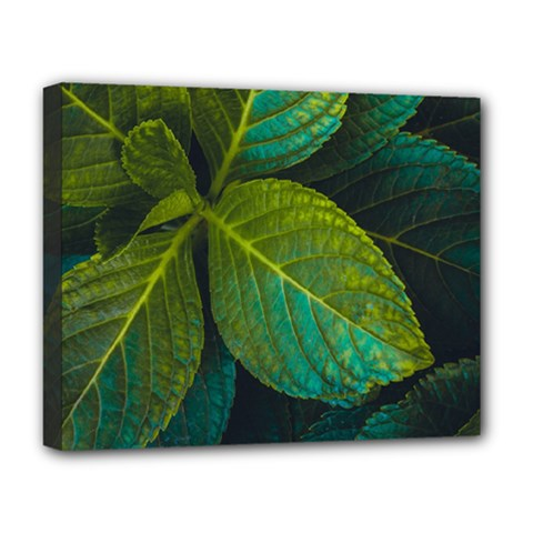Green Plant Leaf Foliage Nature Deluxe Canvas 20  X 16