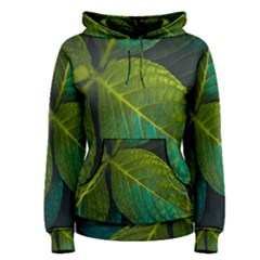 Green Plant Leaf Foliage Nature Women s Pullover Hoodie