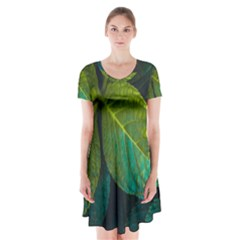 Green Plant Leaf Foliage Nature Short Sleeve V Neck Flare Dress