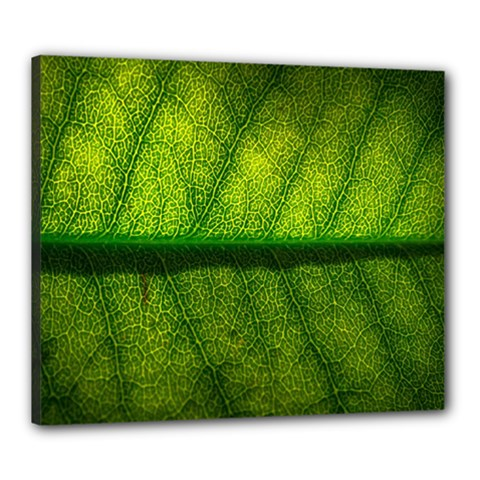Leaf Nature Green The Leaves Canvas 24  X 20
