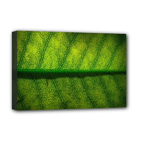 Leaf Nature Green The Leaves Deluxe Canvas 18  X 12