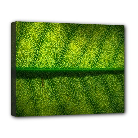 Leaf Nature Green The Leaves Deluxe Canvas 20  X 16